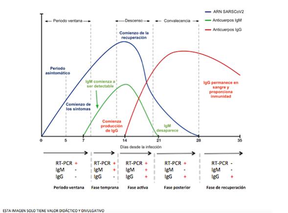 Figura 2. Serología de SARS-CoV-2